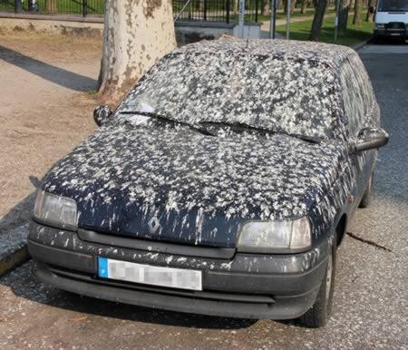 cagada palomas